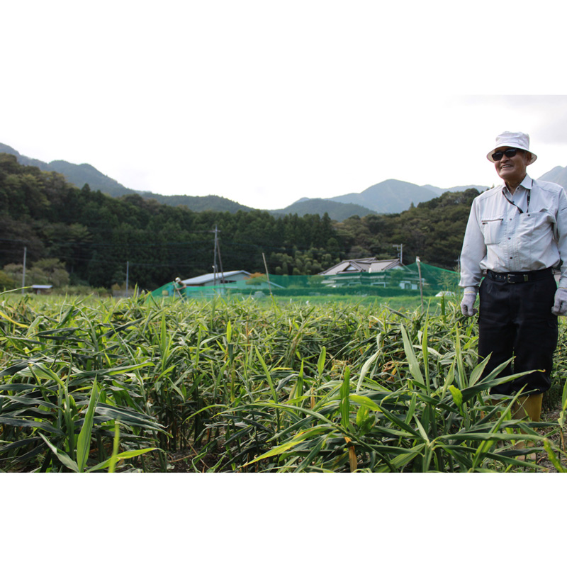 【ギフト用】山梨県産 生姜シロップ 770ml×2本セット【ジンジャーシロップ】