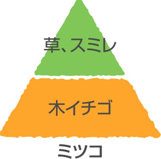 【大苗】バラ苗 ミツコ (Del黄) 国産苗 6号鉢植え品[契約品種]《Han-DEL》