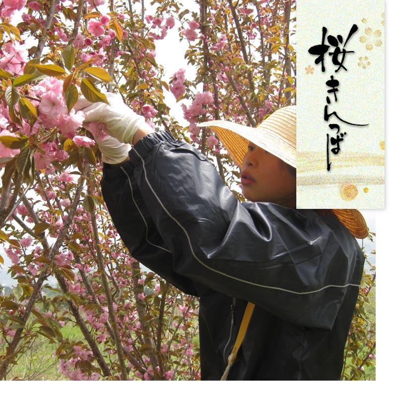 桜きんつば 6個 賞味期間:7日間(常温)2月〜4月上旬