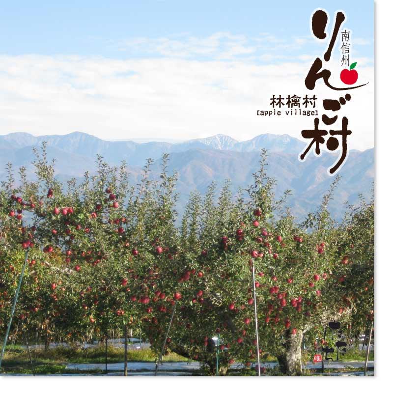 南信州 りんご村 5個 賞味期間:20日間 (常温)通年販売