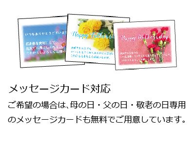 【送料無料】千織chiori 6本入り