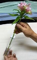 切り花用保水キャップ 「プチエコゼリー S 10g」 ばら売り(内容:エコゼリー約10g)