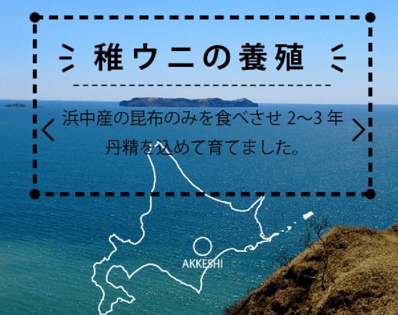 北海道 道南知内野付厚岸 最高級殻付きバフンウニ【10個セット】 1個28-33g