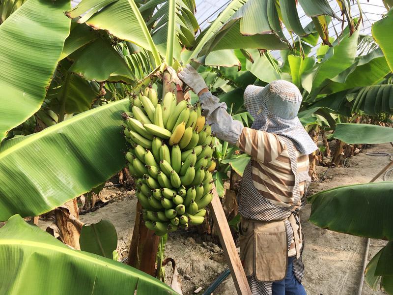 おかやまバナナジャム セット 【送料込】