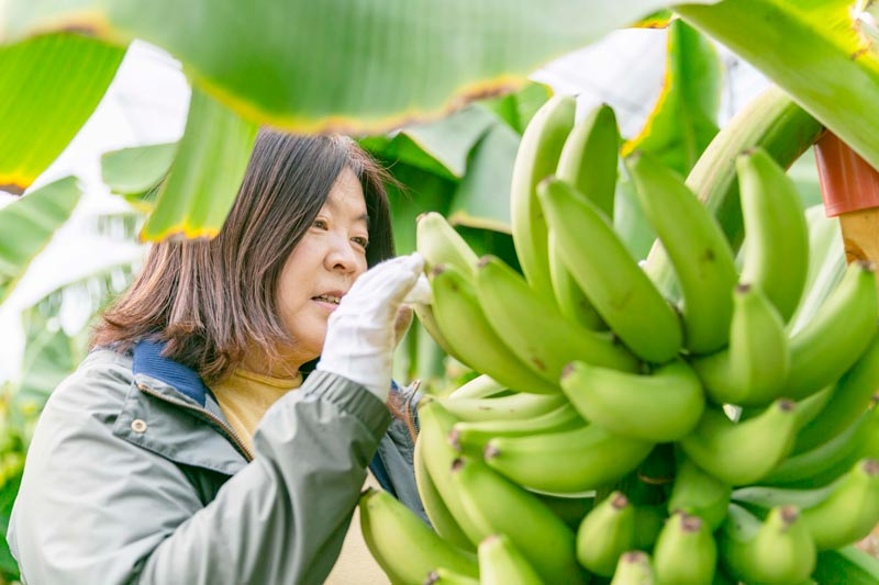 (40%オフ)おかやまバナナ1キロ【送料込】