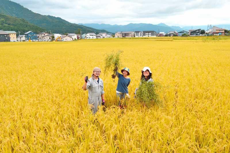 みわ農園 南魚沼産コシヒカリ(玄米)5kg【送料込】
