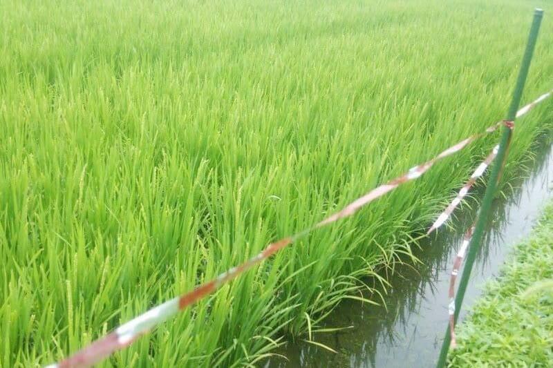 みわ農園 南魚沼産コシヒカリ(従来品種)5kg【送料込】