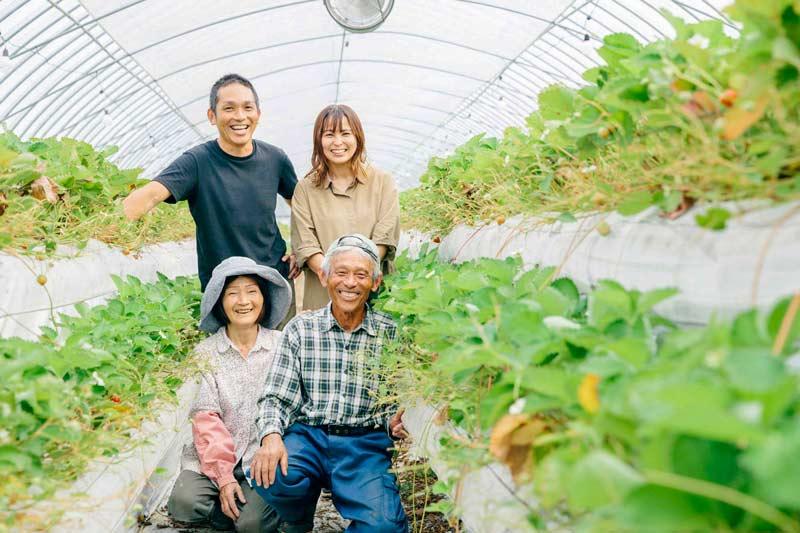 よつぼし なかはた農園のこだわりいちご(4パック)【送料込】