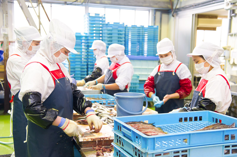 白身で使いやすい浜田産バトウ鯛フィレ1kg【送料込】