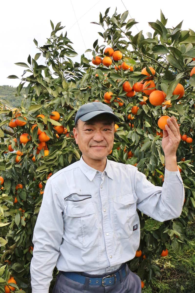 愛媛県産ブラッドオレンジ・タロッコ種(ご家庭用訳あり品)【送料込】