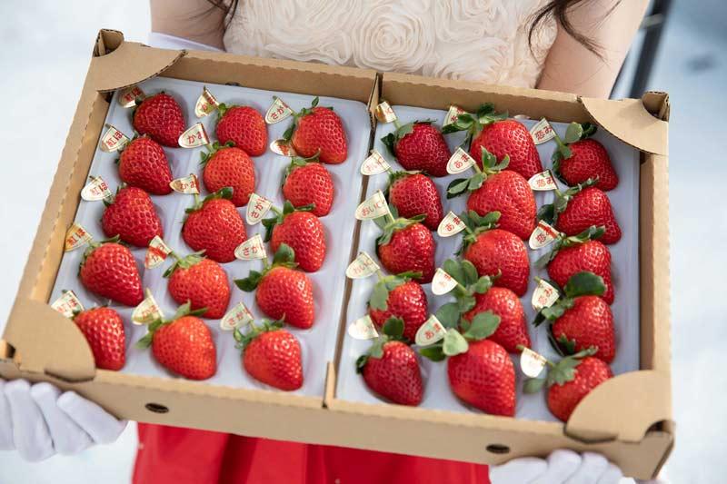 プーさんのいちご園 お家で5種類のいちご食べ比べセット【送料込】