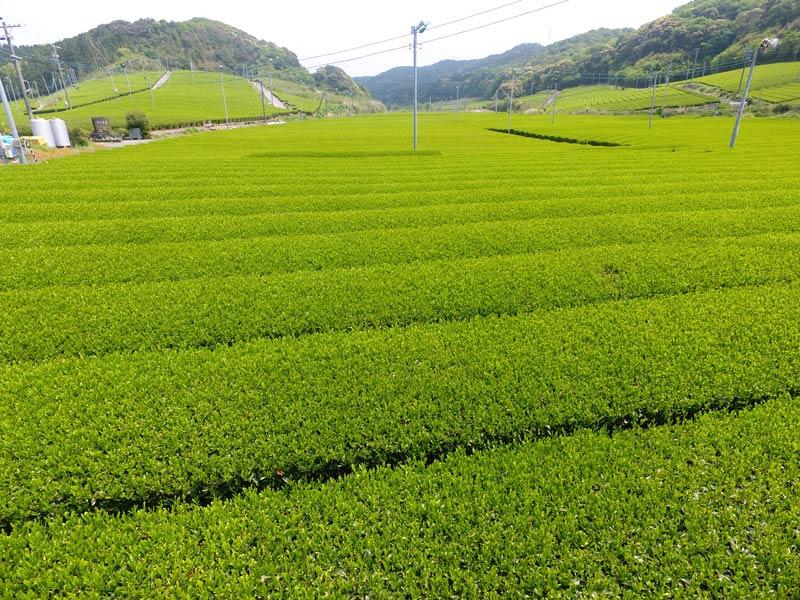 安間製茶の煎茶三種セット【送料込】