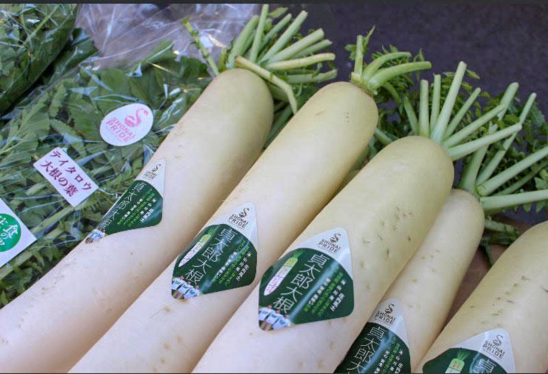 SHONAI PRIDE 季節のこだわり野菜セット【送料込】