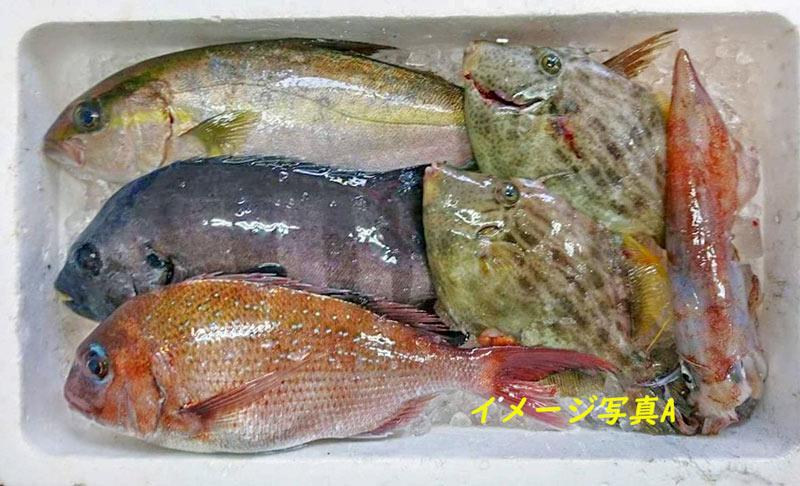 一流料理店御用達 五島列島産 天然鮮魚BOX【送料込】