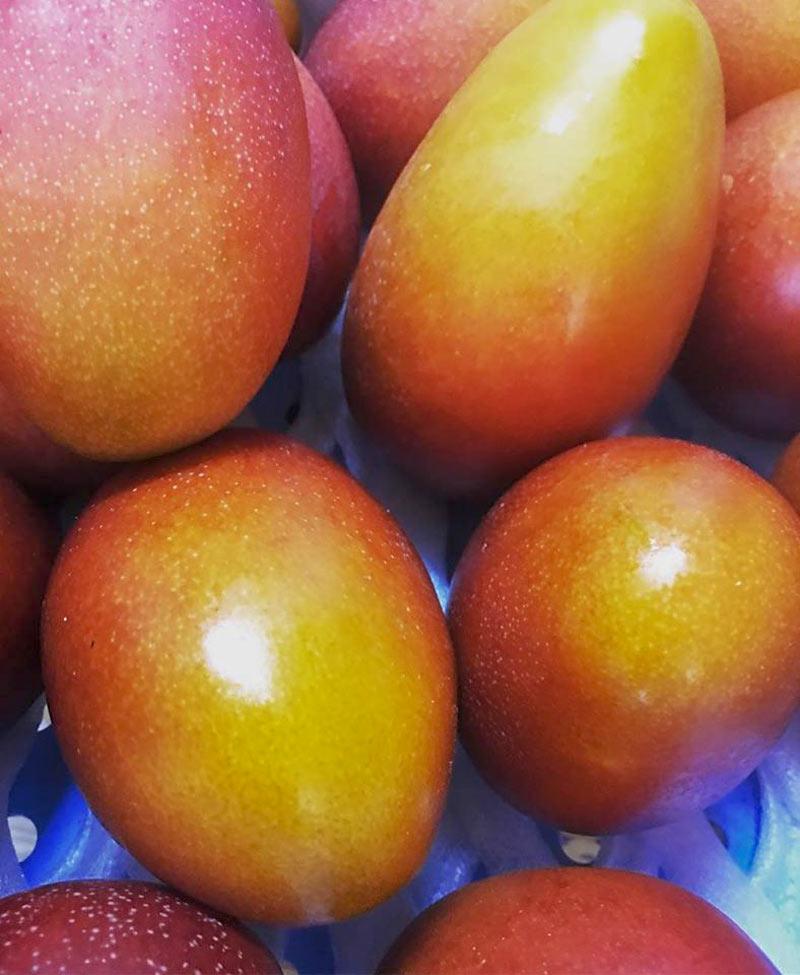 完熟アップルマンゴー2~3玉(1kg)セット