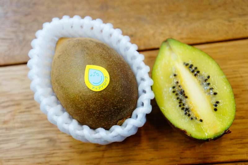 旬のキウイフルーツ品種食べ比べセット(4~6品種入り)【送料込】