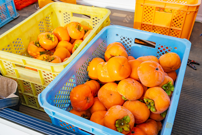 千疋の柿 4kg(秀品)【送料込】
