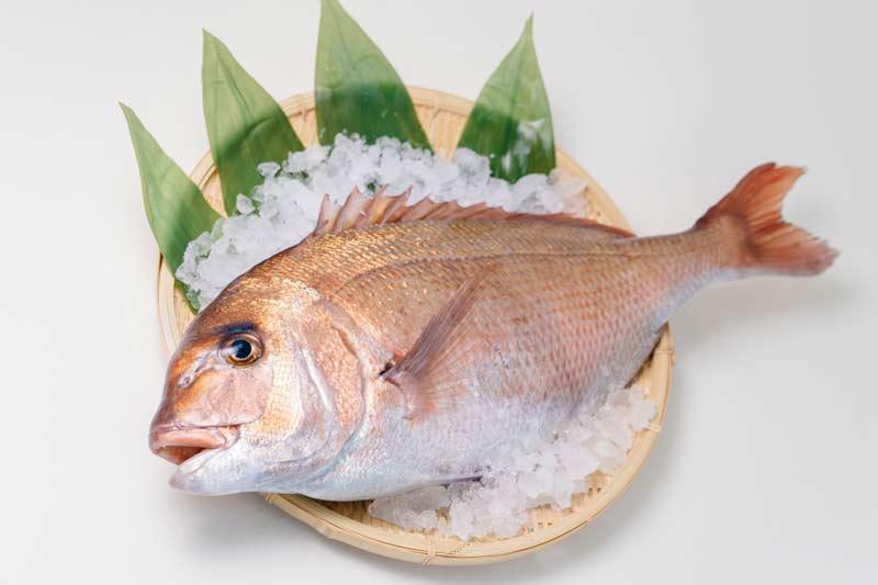 肉厚ふっくら!旨味が自慢の真鯛の切り身