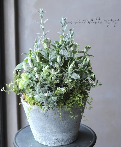 【雑貨】アンティーク・ホワイト カクタスポット 25cm
