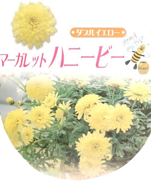 <i>Argyranthemum frutescens</i><BR><BR>マーガレット<BR>ハニービーシリーズ<BR>『ダブルイエロー』