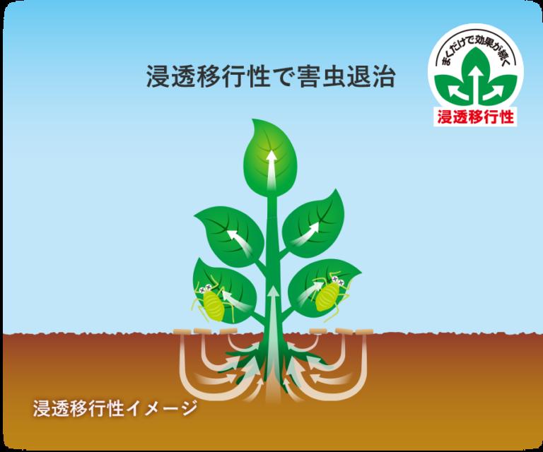 【殺虫・殺菌剤】 ベニカXガード粒剤 550g
