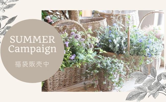 【祝13周年】夏の花苗おまかせ福袋お試しオリジナル培養土入り