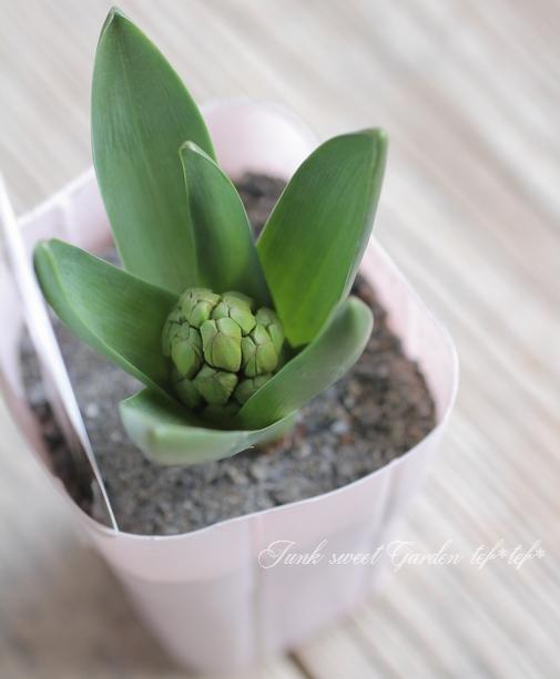 ヒヤシンス ゴージャス八重咲き 『ホワイト』 3球植え