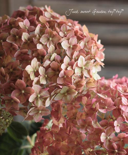 tef*tef*寄せ植え 2016<BR> * no.44 *<BR>大きめの紫陽花『ピンクアナベル』