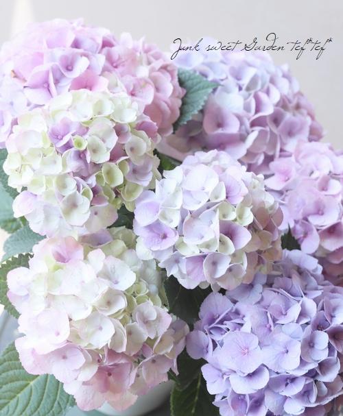紫陽花 『マーブルソーダ』 お色いろいろ