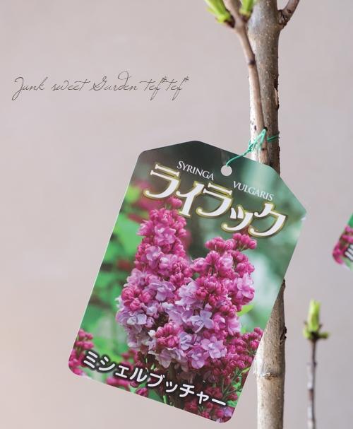 八重咲きライラック 『ミシェルブッチャー』
