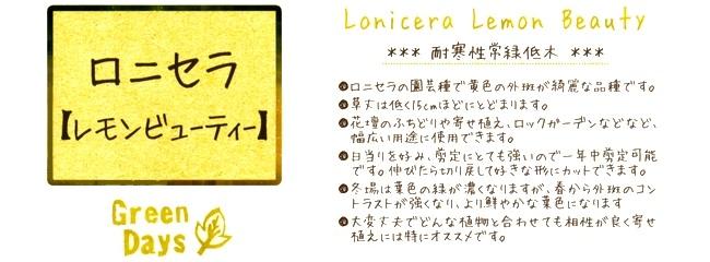 ロニセラ・ニチダ 『レモンビューティ』