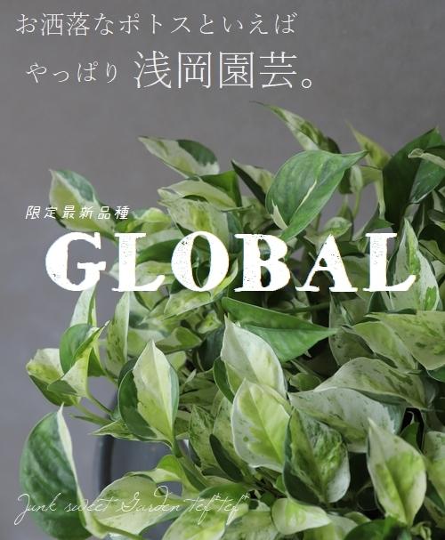 浅岡園芸オリジナル ポトス 『グローバル』 吊り鉢