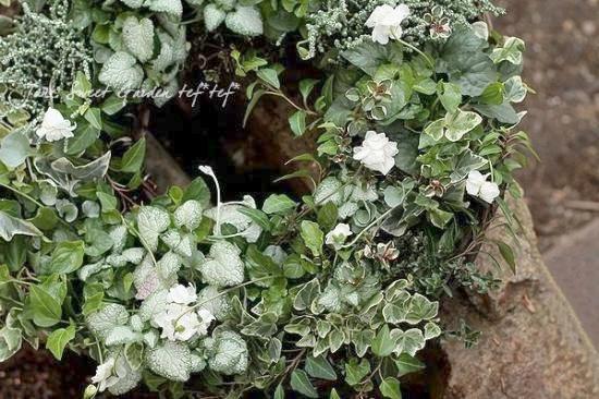 八重咲きパルマスミレ ニオイスミレ 『スワンリー・ホワイト』