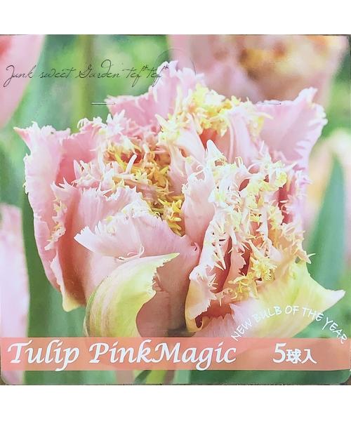 八重咲きチューリップ 『ピンクマジック』 球根5球