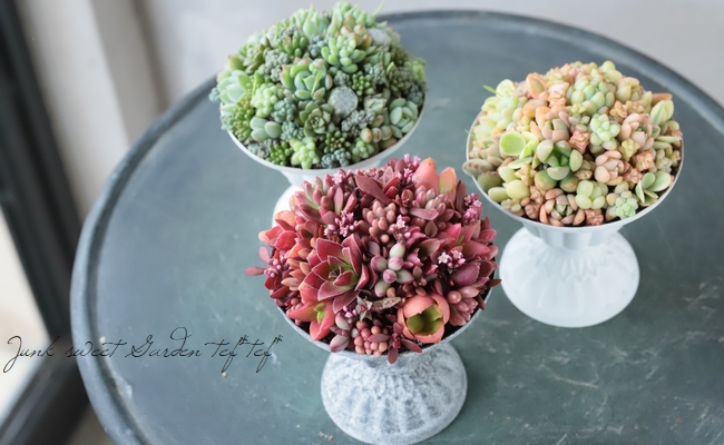 -TEFNIQUE-多肉植物の寄せ植え 2019 * no.34 * 『デザートカップ・マンゴーカラー』
