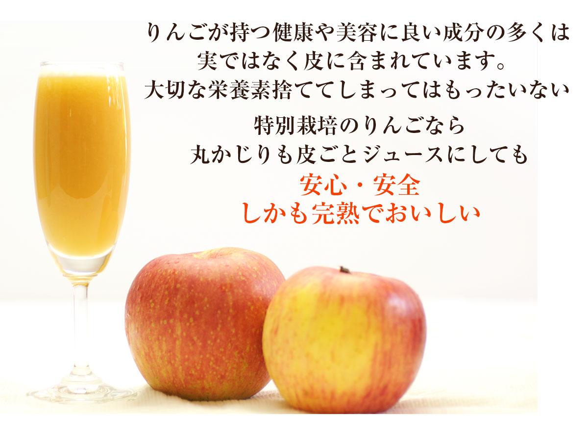 長野県産 りんご 3kg 特別栽培農産物 さみず  国産 訳あり B品 規格外品 林檎