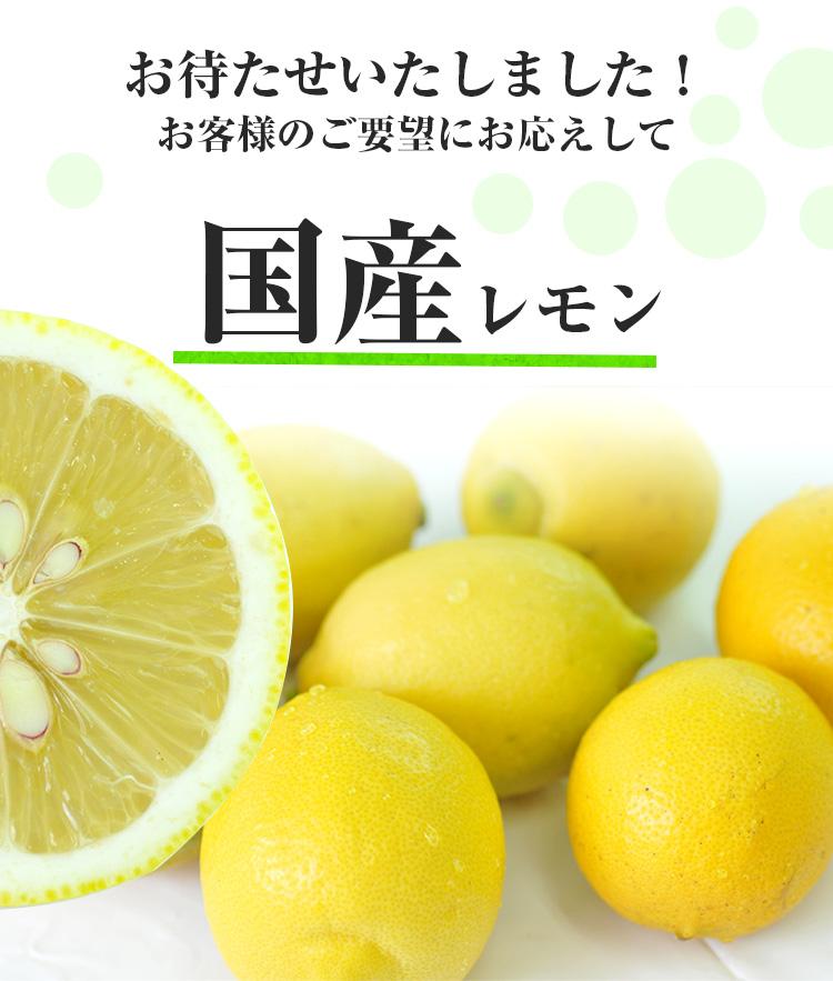 特別栽培 国産レモン 3kg