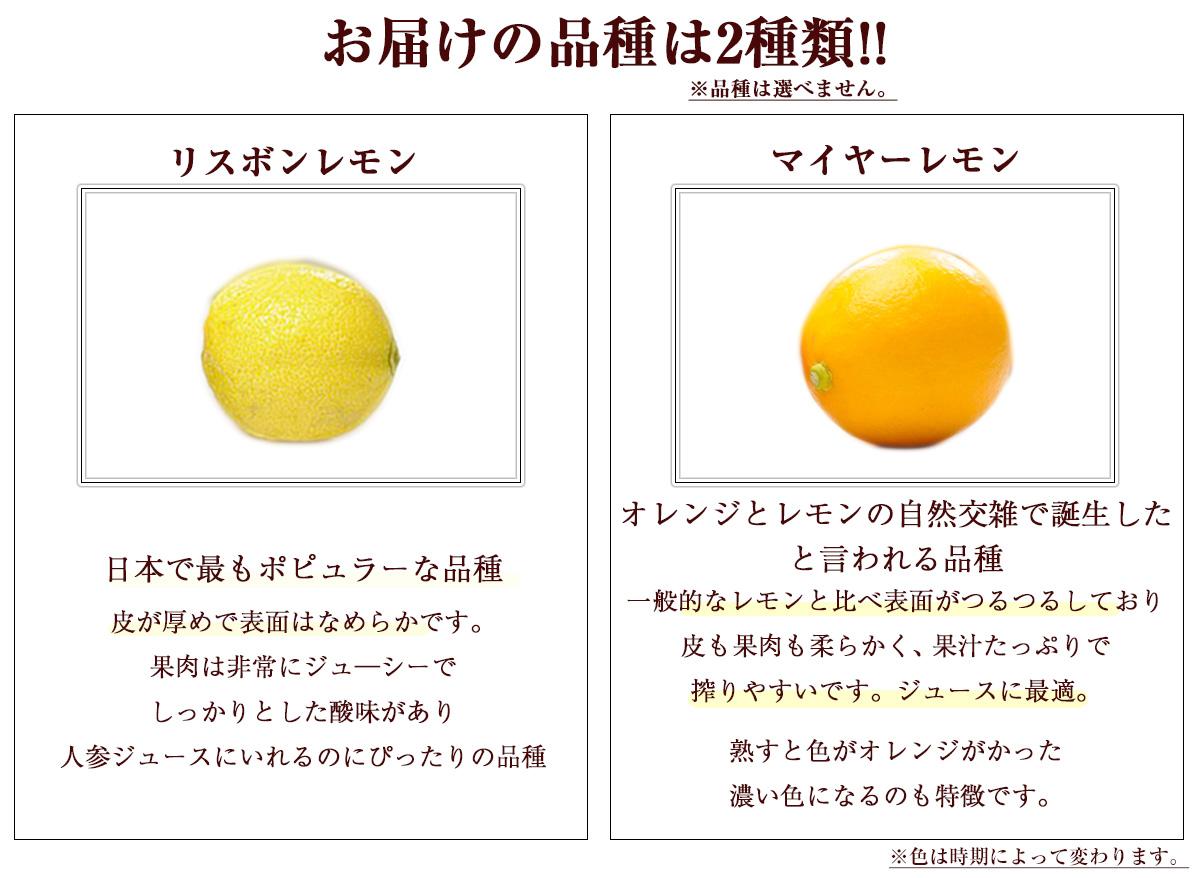 佐賀県産 レモン 3kg 国産 特別栽培農産物