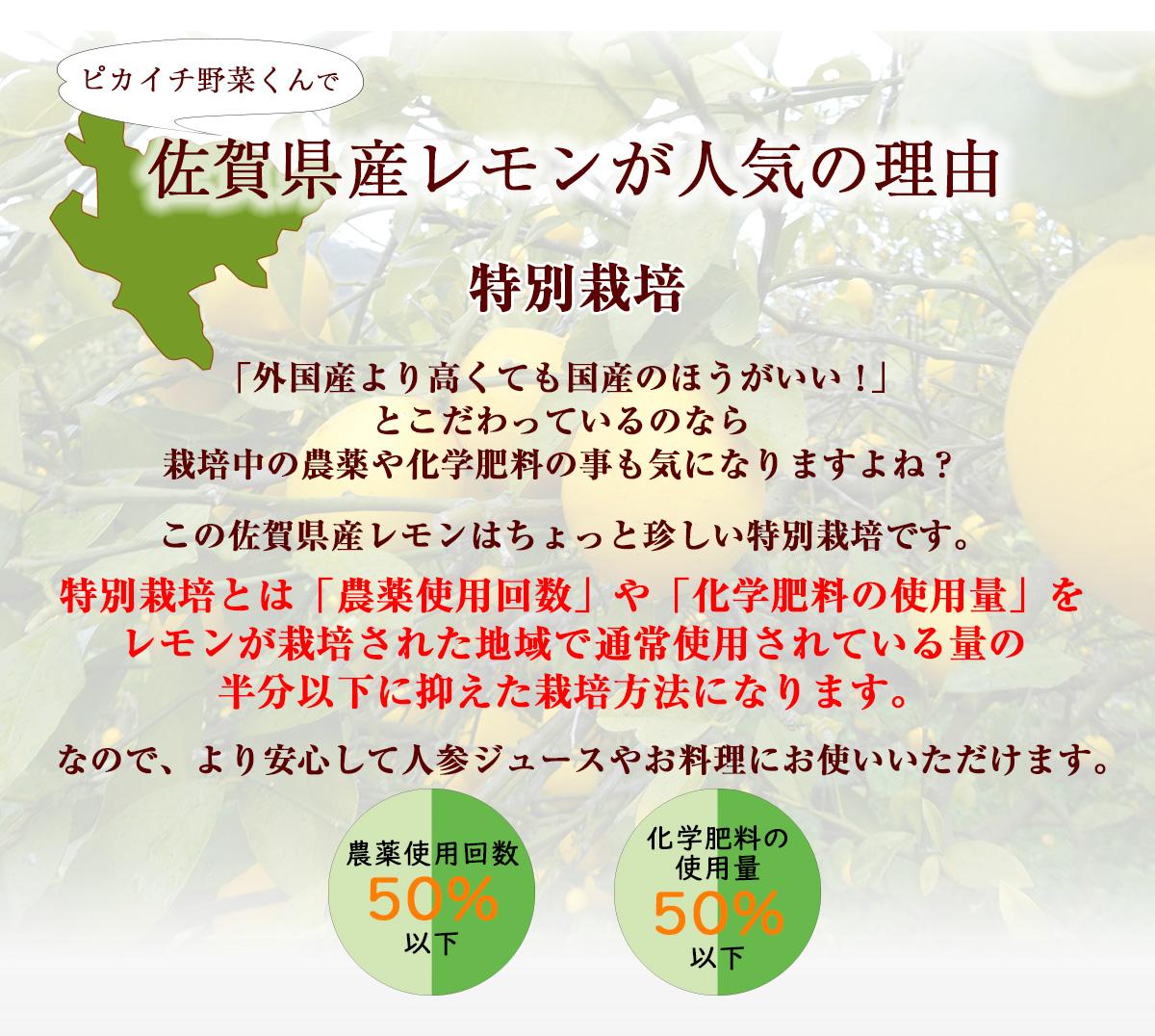 佐賀県産 レモン 5kg 国産 特別栽培農産物 送料無料