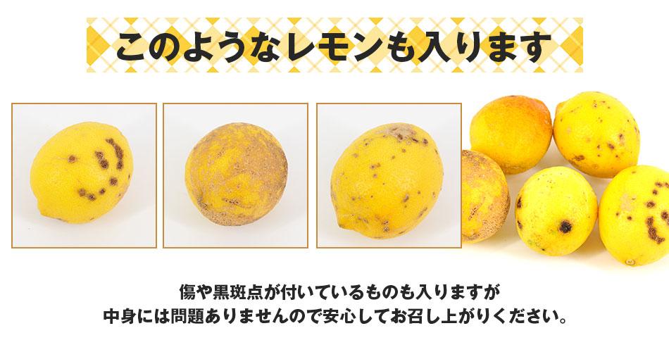 特別栽培 国産レモン 5kg