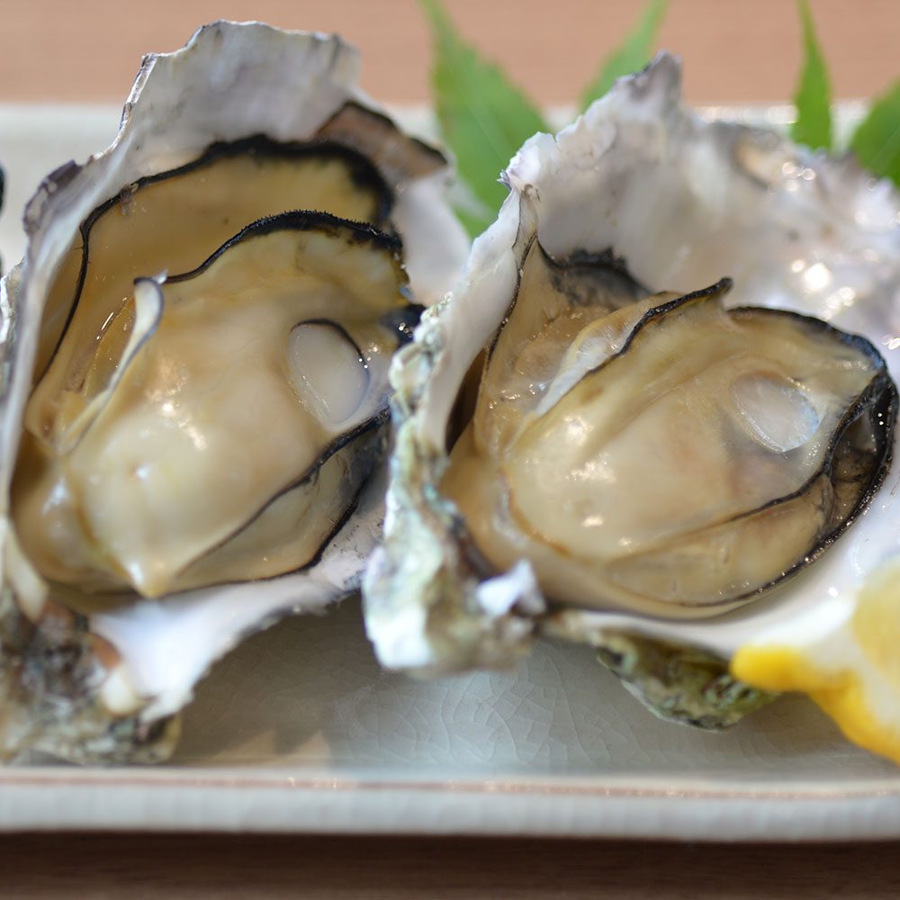 冷凍殻付牡蠣10個入【在庫処分】