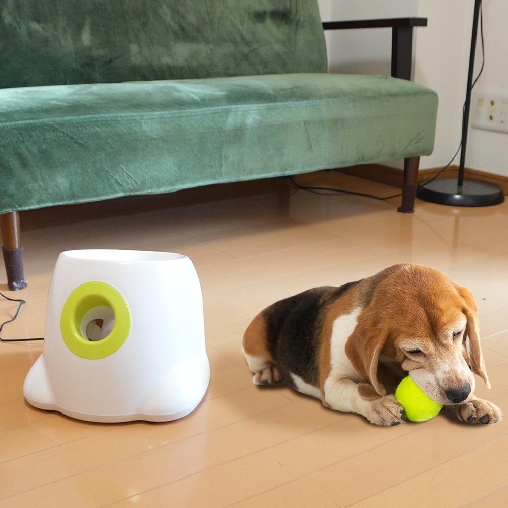 わんちゃんも喜ぶ「ペット用ボール遊びシューター」