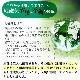 丸山式ガイアコットン Gaiga(ガイガ) セミダブルサイズ(120×200cm)