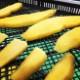 干し芋 国産 無添加 送料無料 四国徳島の自然の味わいたっぷりの 法市の ほしいも
