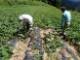 干し芋 10袋セット 国産 無添加 送料無料 四国徳島の自然の味わいたっぷりの 法市の ほしいも