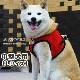 中型犬用ハーネス|ASHU ウェアハーネス メッシュ Lサイズ【リードは別売り】