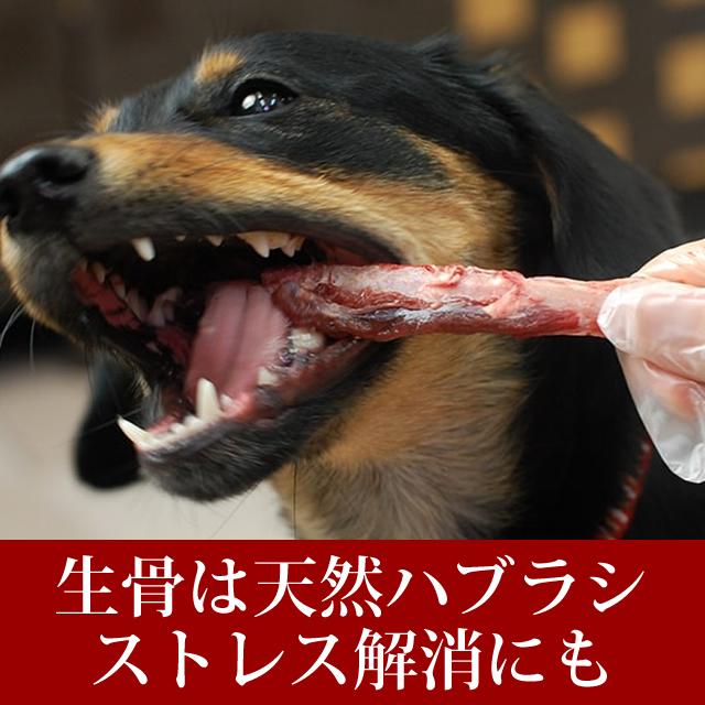 犬用 生骨|エゾ鹿肉 あばら骨 デンタルケアにも【a0034】
