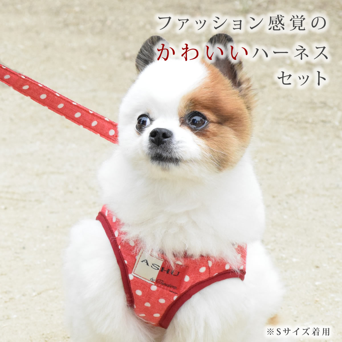 ASHUウェアハーネス水玉&リードセット LLサイズ(中型犬用)