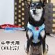 ASHUウェアハーネス水玉&リードセット XLサイズ(中型犬用)