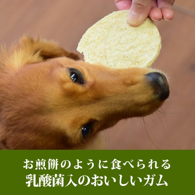 犬用 ガム|なた豆ライスガム小判型